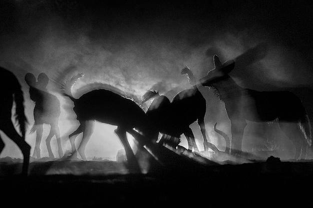 Để bắt được khoảnh khắc này, nhiếp ảnh gia Greg du Toit đã phải nằm bò trên cát, và ánh sáng trong ảnh thực chất là ngọn đuốc của một người cắm trại gần đó.