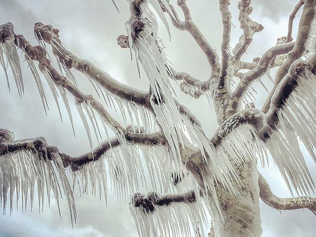 Magali Chesnel, một họa sĩ và nhiếp ảnh gia tự học đến từ Ferney-Voltaire, Pháp, giành giải nhất thể loại ảnh cây cối với tác phẩm chụp một cái cây đóng băng tại Versoix, một thị trấn gần thành phố Genève, Thụy Sĩ. Nhiệt độ tại khu vực cô chụp ảnh xuống tới mức -18 độ C và gió rất mạnh