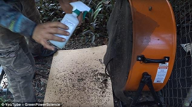 Để tận diệt muỗi cho chết hẳn, anh đã xịt thêm cồn vào tấm màn sắt