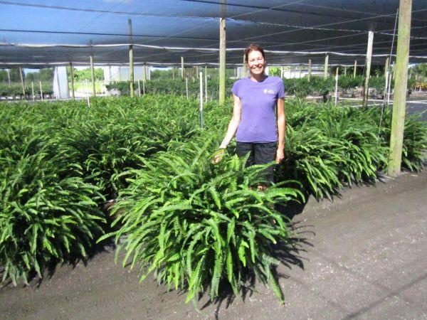 Nasa giới thiệu 17 loại cây cảnh giúp thanh lọc không khí cực tốt, phù hợp cho ngày Tết - Ảnh 5.
