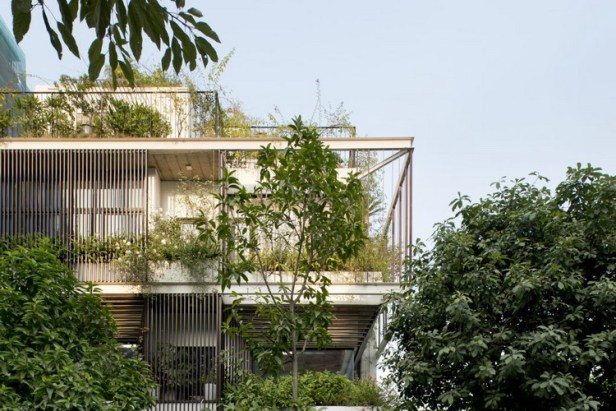 Chính vì vậy chủ nhà đã sử dụng cả một hệ lam thép bao bọc xung quanh để cây leo có thể phủ xanh toàn bộ ngôi nhà nhằm tránh nóng