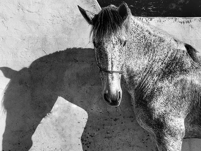 Giải nhất thể loại ảnh động vật năm nay thuộc về Francesca Tonegutti, một kiến trúc sư tại Milan, Italy. Bức ảnh được cô chụp chú ngựa Yeguizo của mình tại Tây Ban Nha khi nó đứng nghỉ chân dưới cái nắng chói chang