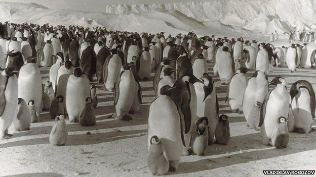 Giữa vùng băng tuyết lạnh lẽo, ý chí sống còn của con người bị thử thách tới mức tận cùng.