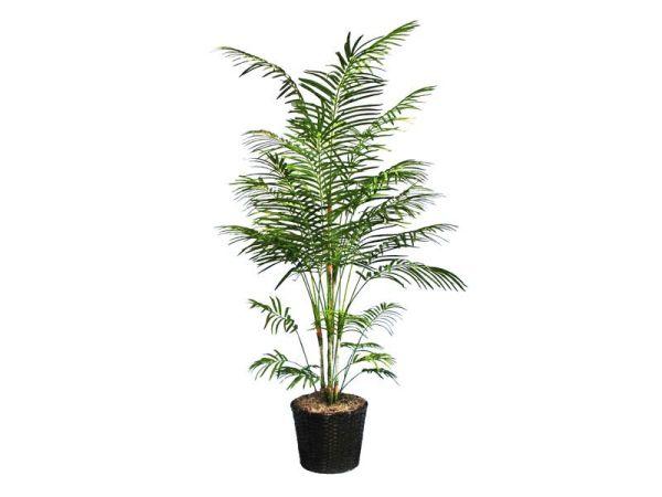 Nasa giới thiệu 17 loại cây cảnh giúp thanh lọc không khí cực tốt, phù hợp cho ngày Tết - Ảnh 8.