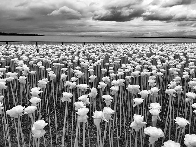 Sidney Po, một nhiếp ảnh gia tự học đến từ Cebu, Phillippines, giành giải thưởng thể loại này với bức ảnh chụp cánh đồng tại thị trấn Cordova, nằm cách thành phố Cebu 20km về phía đông nam