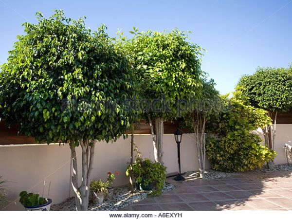 Nasa giới thiệu 17 loại cây cảnh giúp thanh lọc không khí cực tốt, phù hợp cho ngày Tết - Ảnh 9.