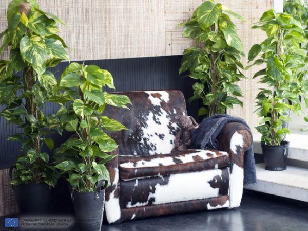 Nasa giới thiệu 17 loại cây cảnh giúp thanh lọc không khí cực tốt, phù hợp cho ngày Tết - Ảnh 10.