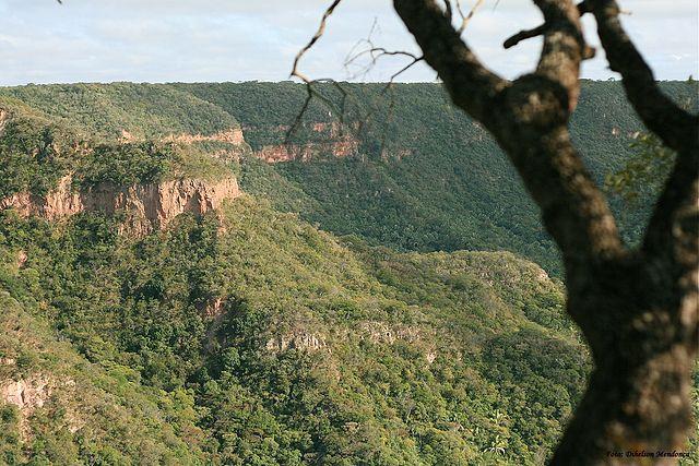 Rừng Caatinga.