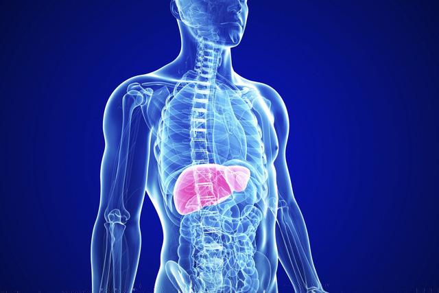 Gan nằm phía bên phải khoang bụng, dưới cơ hoành và trên dạ dày