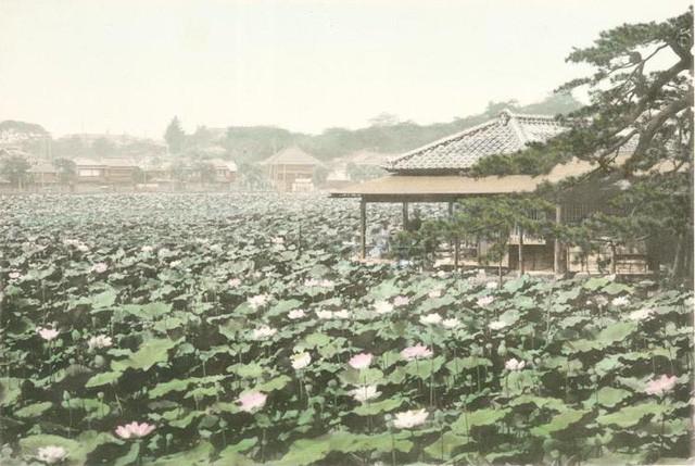 Tokyo từng yên bình đến lạ thường trước khi trở thành đô thị sầm uất nhất thế giới - Ảnh 8.