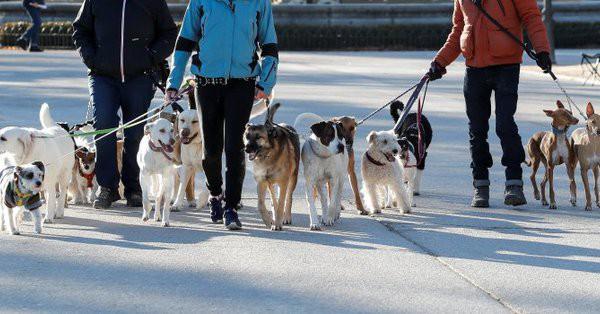 Softbank đầu tư 300 triệu USD vào startup cung cấp dịch vụ dắt chó đi dạo - Ảnh 1.