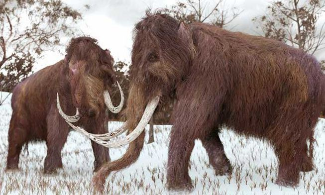 Tại sao khoa học lại phải bỏ ra hàng chục năm trời chỉ để hồi sinh voi ma mút? - Ảnh 1.