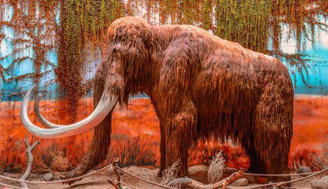 Tại sao khoa học lại phải bỏ ra hàng chục năm trời chỉ để hồi sinh voi ma mút? - Ảnh 4.