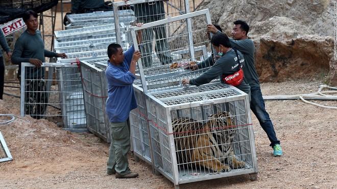Trung Quốc cho phép sử dụng sừng tê, cao hổ cốt sau lệnh cấm 25 năm khiến các nhà bảo vệ môi trường lo ngại - Ảnh 1.