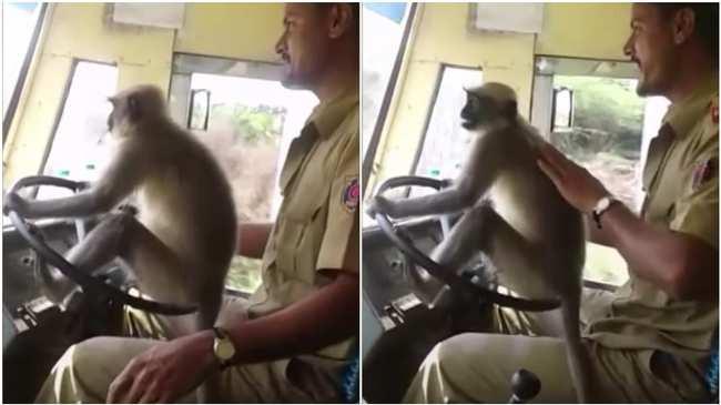 Cho khỉ cầm lái gần 10 phút, lái xe buýt tại Ấn Độ bị đình chỉ - Ảnh 1.