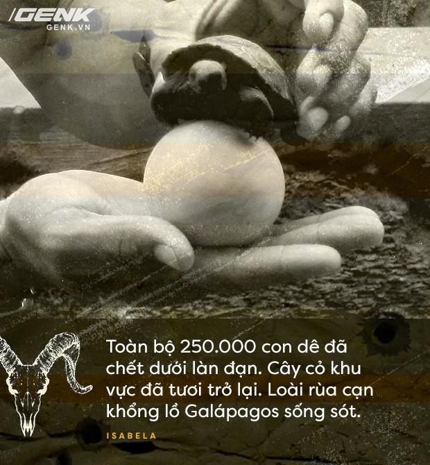 Dự án Isabela: dùng trực thăng và súng máy để cứu sống loài rùa cạn khổng lồ khỏi tuyệt chủng - Ảnh 8.