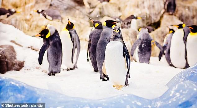 Gen kháng kháng sinh theo chân người lây nhiễm đến những con chim cánh cụt ở Nam Cực - Ảnh 2.
