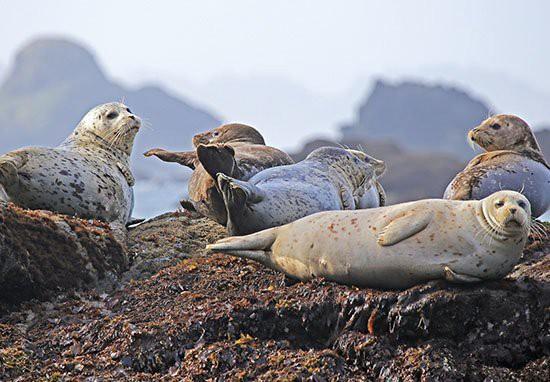 Scotland: Người đàn ông đi câu cá mắc kẹt trên vách đá hàng giờ vì bị 50 con hải cẩu truy đuổi - Ảnh 1.