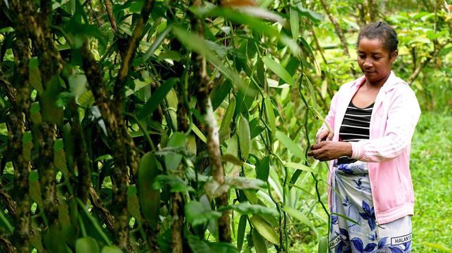 Bán đảo Masoala: Thiên đường nhiệt đới đa dạng bậc nhất thế giới nằm ở đây - Ảnh 11.