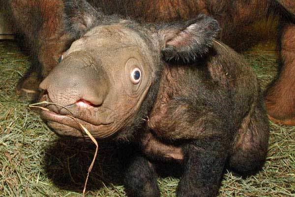 9 loài vật hiếm cực độ có khả năng tuyệt chủng trước cả khi bạn biết đến chúng - Ảnh 6.