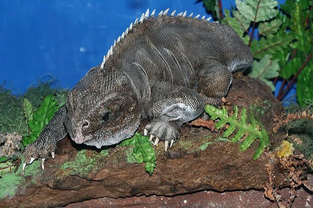 9 loài vật hiếm cực độ có khả năng tuyệt chủng trước cả khi bạn biết đến chúng - Ảnh 7.