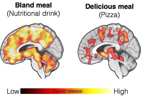 Khoa học đã tìm ra lý do bất ngờ đằng sau việc nghiện ăn pizza - Ảnh 2.