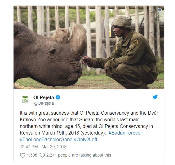 Sudan, con tê giác trắng đực cuối cùng trên trái đất đã chết - Ảnh 1.