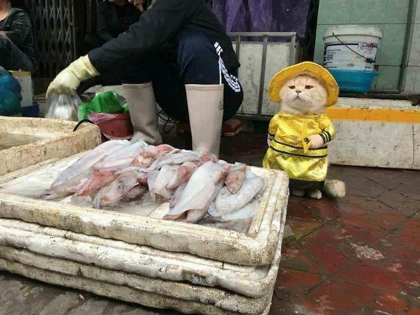 Sau bức ảnh này, Chó trở thành người bán cá nổi tiếng nhất Việt Nam