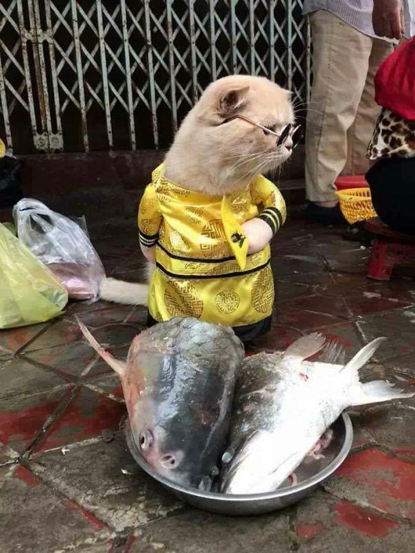 Chú mèo thuộc giống Scottish Fold (Mèo tai cụp) này được chủ nhân đặt tên là Chó