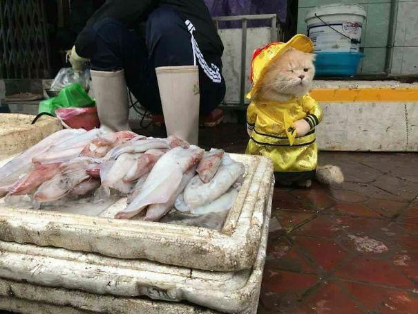 Chú trở thành một ngôi sao thực thụ tại khu chợ ở Hải Phòng