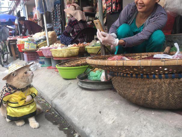Chó nhận được sự chú ý của cả khách mua cá và những chủ hàng bán cá bên cạnh