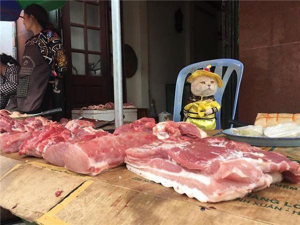 Đôi khi, Chó cũng thử bán những mặt hàng khác như thịt...