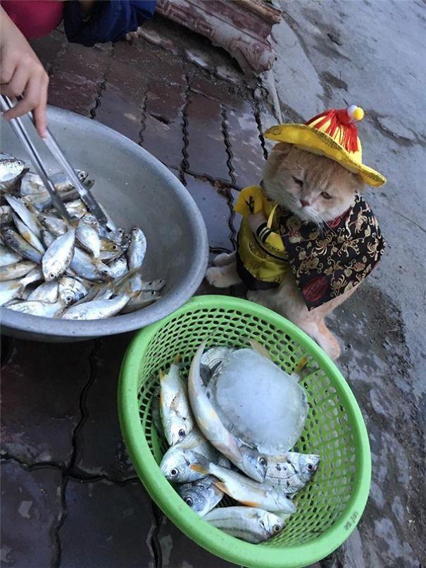 Tuy nhiên, chắc chắn cá vẫn là món ăn ưa thích của chú