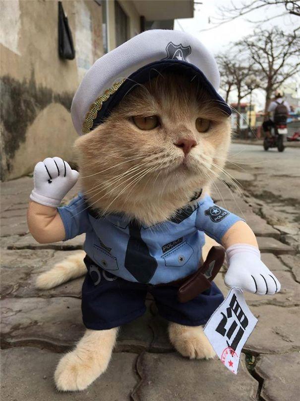 Khi rời chợ, Chó còn được chủ mặc cho những bộ trang phục cực ngầu khác