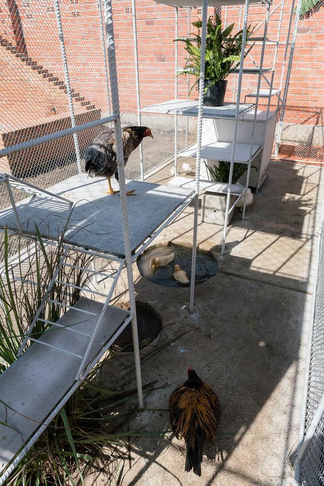 Chuồng gà ở Long An được lên tạp chí kiến trúc Mỹ - Ảnh 12.