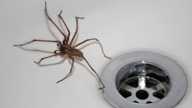 Những việc vặt kỳ lạ mà hái ra tiền: Giết một con nhện trả 1,1 triệu, dạy bạn gái cách chần trứng được 2,2 triệu - Ảnh 6.