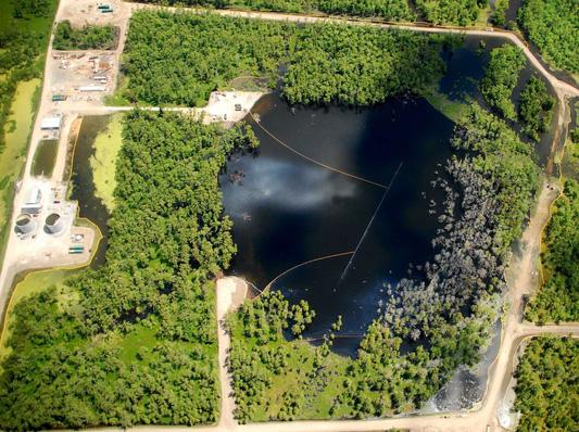 Bí mật tại đầm lầy nuốt cây khiến Cục Khảo sát Địa chất Mỹ đau đầu - Ảnh 3.