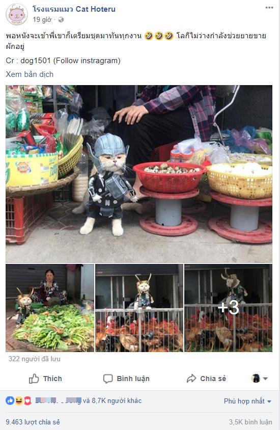 Chú mèo tên Chó lại hóa thân thành siêu anh hùng Avengers, được bạn bè Thái Lan cưng nựng, xuýt xoa hết lời - Ảnh 1.