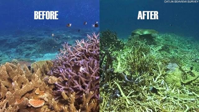 Viễn cảnh kinh hoàng nào đón đợi ta khi toàn bộ rạn san hô trên Trái đất này biến mất? - Ảnh 3.