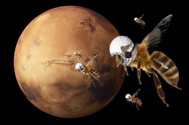 NASA bí mật phát triển robot giống loài ong để khám phá Sao Hỏa - Ảnh 2.