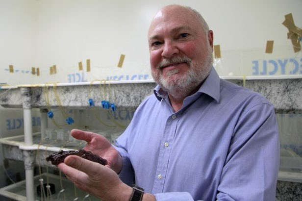 Các nhà khoa học sao chép thành công trí nhớ của ốc sên, mở ra khả năng mới để chữa trị bệnh Alzheimer - Ảnh 2.