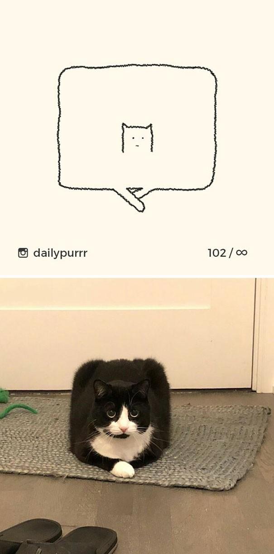 Instagram với cách vẽ mèo trong 2 nốt nhạc khiến Internet thích thú - Ảnh 9.