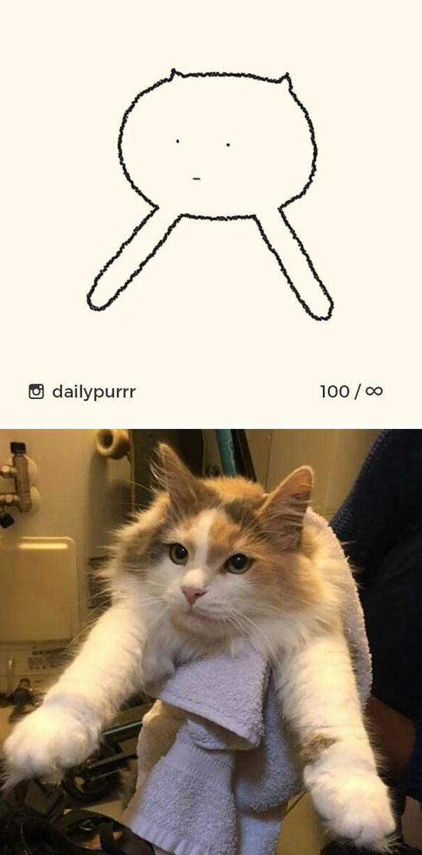 Instagram với cách vẽ mèo trong 2 nốt nhạc khiến Internet thích thú - Ảnh 19.