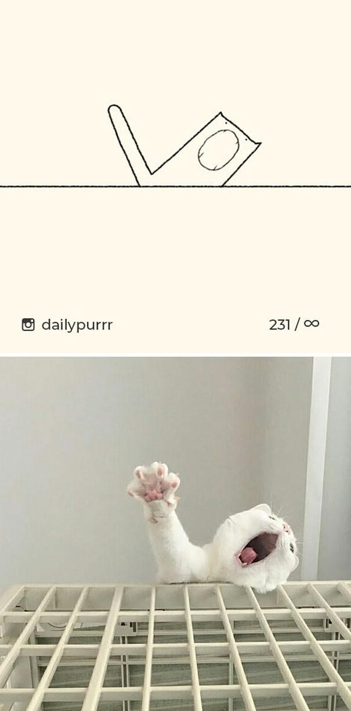 Instagram với cách vẽ mèo trong 2 nốt nhạc khiến Internet thích thú - Ảnh 1.