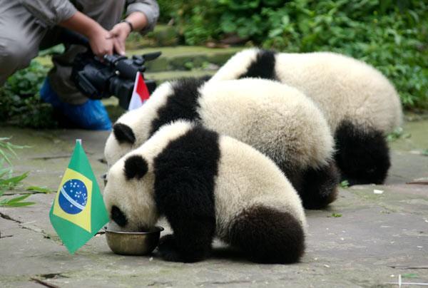 7 tiên tri động vật đã và đang gây sốt vì dự đoán đúng kết quả World Cup - Ảnh 4.