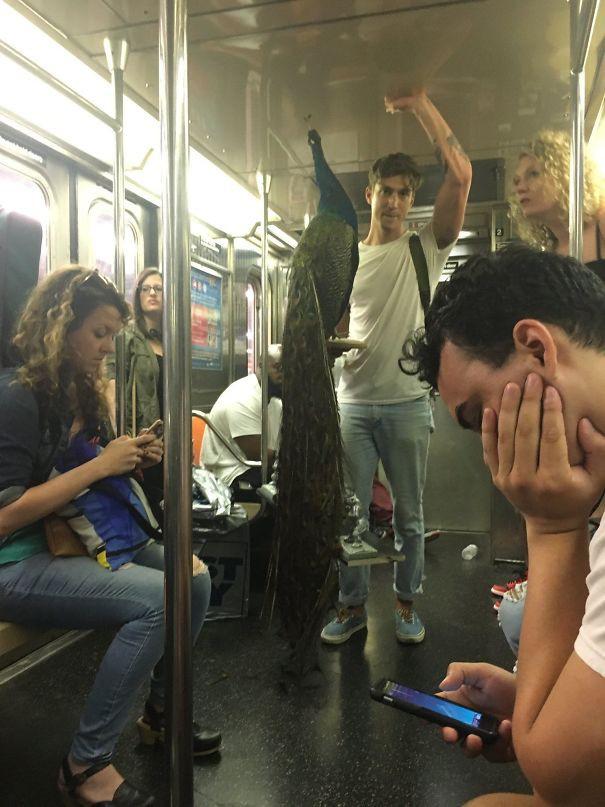 [Vui] Cưỡi bình cứu hỏa cho tới ăn bắp cải sống, đây là những hành khách kỳ lạ nhất tại ga tàu - Ảnh 2.