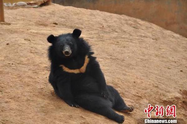 Ông chú tưởng bở mua được chó Phốc sóc với giá 1 triệu, 8 tháng sau mới phát hiện ra đó là gấu mèo - Ảnh 1.