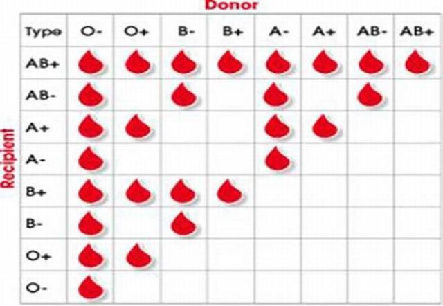 Sự thật thú vị về các nhóm máu bạn có thể không biết: Luôn bị muỗi đốt, dễ căng thẳng hay đãng trí cũng từ đây mà ra! - Ảnh 3.