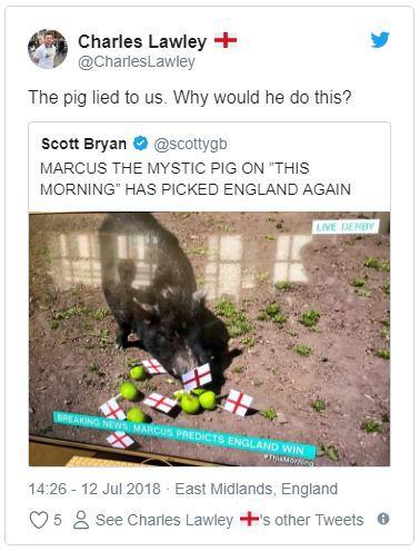 Số phận nghiệt ngã của chú lợn tiên tri, cộng đồng mạng đòi làm thịt vì đoán sai trận Anh gặp Croatia - Ảnh 1.