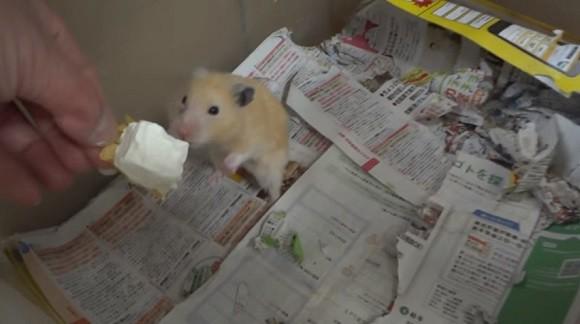 Youtuber Nhật Bản bị dân mạng truy lùng vì đối xử không ra gì với hamster - Ảnh 1.